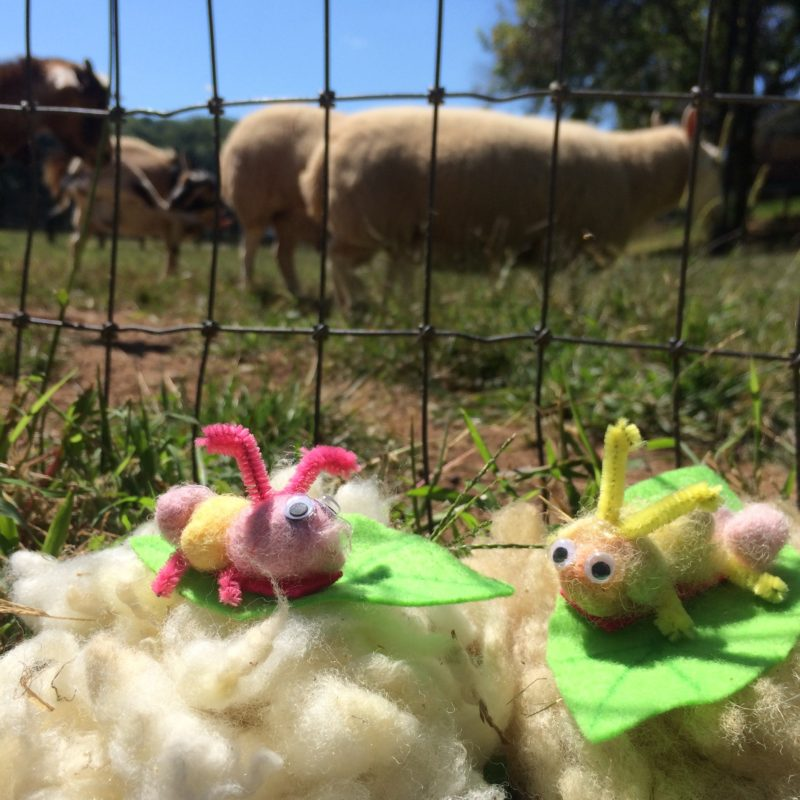 Arts and crafts: Make cute caterpillars out of the sheeps' wool!