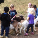 Fun with the goats