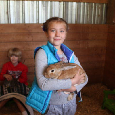 Farm animals: bunnies