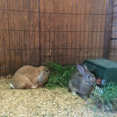 Farm animals: The bunnies are so cute!