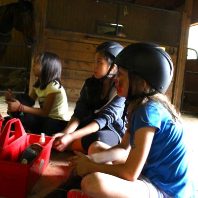 Farm Animal Care: Learning how to groom horses.