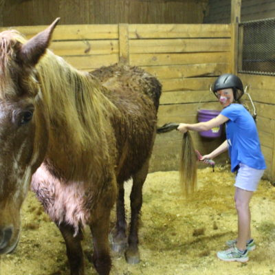 Farm Animal Care: Grooming the horses.