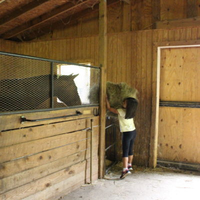 Farm Animal Care:  Feeding the horses.